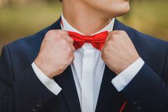 Close up of hands of man correcting red bowtie. Man wears blue s Royalty Free Stock Photo