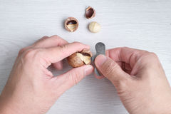 Close-up hands opening macadamia's shell Stock Photo