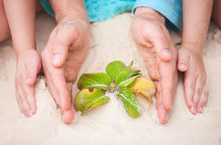Hands protecting small plant Stock Photos