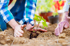Close up of hands, senior couple planting little seedling Stock Images