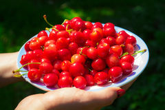 Close up of hands with vintage bowl full of cherries. Female hands holding a plate with red cherries Stock Images