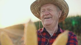 Close-up of happy farmer shows the good corn harvest at camera 4K.  stock video footage