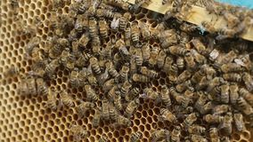 Close up of hardworking bees on hive stock video footage