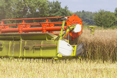 Close up of harvesting oil seed rape. Close up of combine harvester harvesting oil seed rape Royalty Free Stock Photography