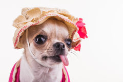Close-up with a hat on the head. Royalty Free Stock Photography