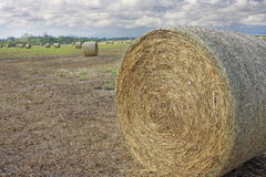 Close up of hay bale in the field Stock Photos
