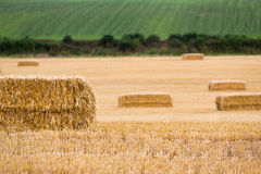 Close-up of hay bales and hedgerows Stock Photo
