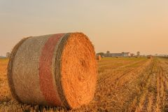 Close-up of a hay cylindrical bale in a farmland. Expanse of hay cylindrical bales in a farmland Royalty Free Stock Image