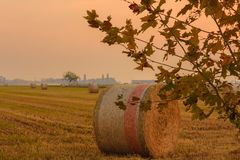 Close-up of a hay cylindrical bale in a field at a sunset. Cylindrical bales of hay called round bales packed in colored nets Royalty Free Stock Image