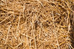 Chaotic texture of hay in daylight stock photos