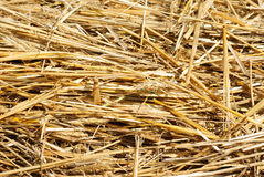 Close up hay straw stack texture Stock Photography