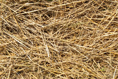 Close up hay straw stack texture, agriculture Royalty Free Stock Photography