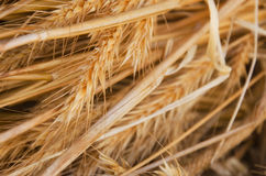 Close-up hay straw stack texture. Agriculture background of dry straw stack Royalty Free Stock Photos