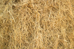 Close up hay straw texture, agriculture background. Cluster straw, truss straw - abstract background stock images