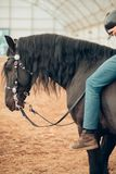 Close up of Head of black horse. Close up of Head of a black horse royalty free stock images