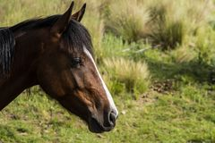 Close-up of the head of a brown horse. royalty free stock images