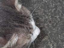 Close up Head of Cute Cat Lies Down on The Floor, Selective Focus royalty free stock photography