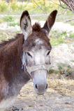 Close-up of a head of a donkey stock image