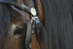 Close-up of the head of a horse with halter and reins royalty free stock image