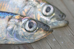 Close-up of heads of two baltic herring stock images