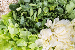 Close-up of healthy organic green leafy vegetable. With loads of dietary fibre Royalty Free Stock Images