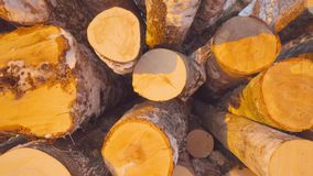 Close-up heap of stacked chopped logs of fresh trees in winter forest at yellow sunset tracking shot. Woods felling industry surrounded by sunlight steadicam stock video footage