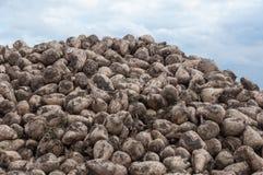 Close-up of a heap of sugar beets Stock Photos