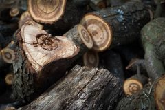 Close-up of a heart-shaped saw cut down firewood for heating a house, background or concept.  stock photography