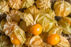 Close up, Heathy fresh Gooseberry Cape. Heathy fresh Gooseberry Cape,  Close up Royalty Free Stock Photos