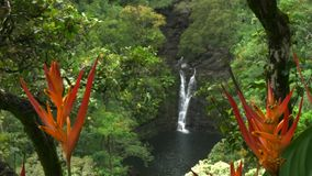 Close up of heliconia psittacorum at lower puahokamoa falls on Maui