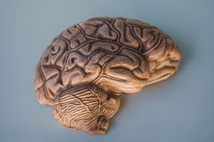 Hemisphere of brain, in 3D. royalty free stock images
