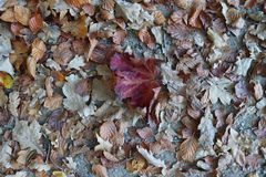 Close up high resolution surface of autumn leaves on the ground stock images