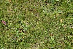 Close up high resolution surface of green grass royalty free stock photos