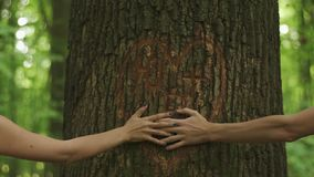 Close-up of holding hands of young loving couple on a background of a heart carved on a tree in green spring forest.  stock video footage