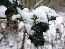 Close-up holly leaves with snow stock images