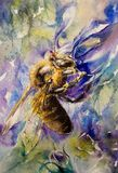 Honey bee watercolors painted. Stock Photo