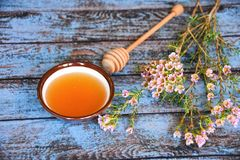 Honey dipper and manuka tree. Close up for honey dipper and manuka flower near honey bowl on a blue table. Transparent orangish - yellowish colour and royalty free stock photo