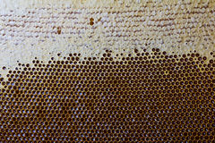 Close-up of honeycombs filled with organic honey. macro texture. Royalty Free Stock Image
