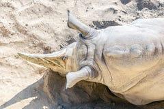 Close-up hoogste mening die van witte rinoceros op zand liggen Bedreigd speciesredding en beschermingsconcept royalty-vrije stock afbeeldingen
