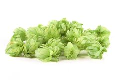 Close up of hop flowers. Stock Photography