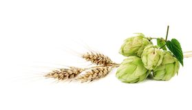 Close up of hop flowers and wheal ear. Stock Photos