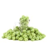 Close up hop in a glass of beer. Royalty Free Stock Photo