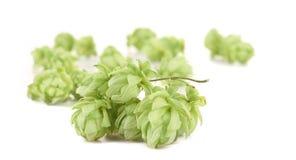 Close up of hop. Stock Photos