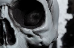 Close-up view of the human skull Royalty Free Stock Photos