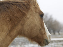 Close-Up of Horse Stock Images