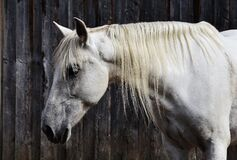 Close up of horse Royalty Free Stock Photo