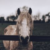 Close-up of Horse Royalty Free Stock Photo