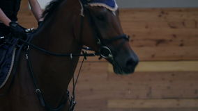 Close up on horse in big hall training stock video footage