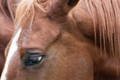 Close Up of Horse Stock Photo