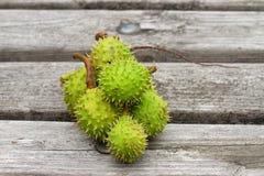Horse-chestnuts macro Stock Image
